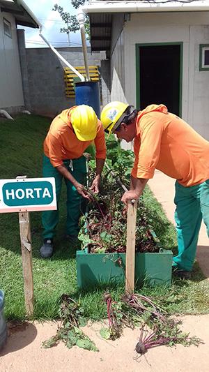 Hortas são nova ocupação de espaços nas edificações. MRV/Divulgação