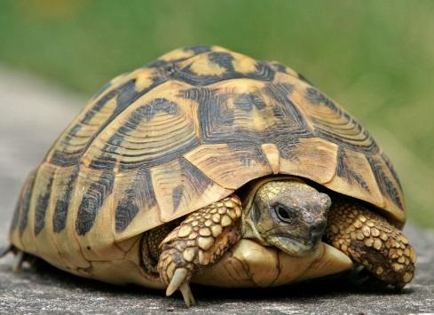 Aposentado tem que esperar acordo-tartaruga do INSS. Crédito: Massimo Pia/Guidapet.com