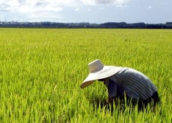 Trabalho na lavoura também conta na aposentadoria rural. Foto/Crédito: wp.clicrbs.com.br