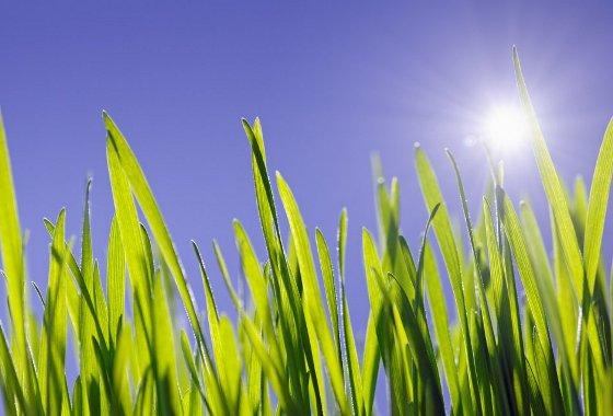 Sol e grama