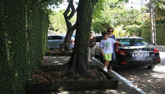 Calçcada toda ocupada por uma árvore. O proprietário que quiser fazer recuo no muro, a PCR bancará a obra - Foto Paulo Paiva DP/D.A.Press