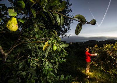 Gilvaldo Pedrosa em sua plantação de 1,5 hectare, em Sairé