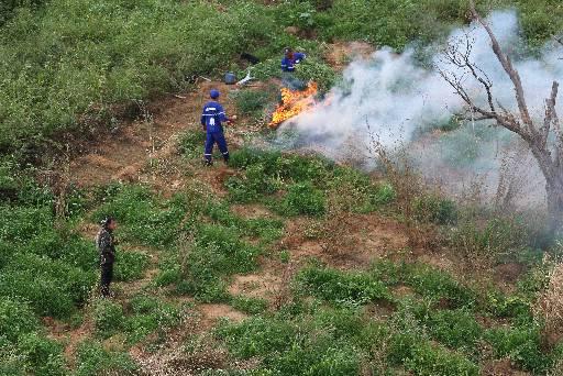 Plantações foram destruídas nas ilhas do Rio São Francisco. Fotos: Paulo Paiva/DP/D.A Press