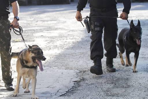 Cães da Polícia Federal são treinados para achar drogas e fazem demonstração nas palestras. Foto: Ricardo Fernandes/DP/D.A Press